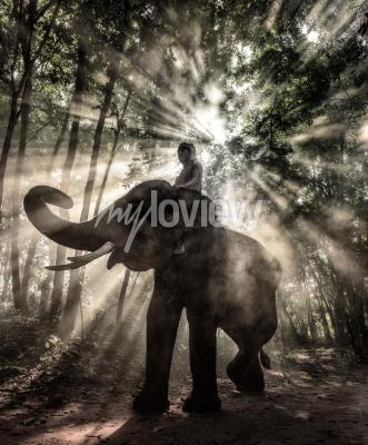 Canvastavlor Mahout på Surin Thailand elefant