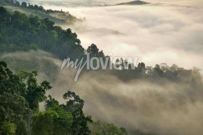 Fototapet Mistig dimma på berget i tropisk skog