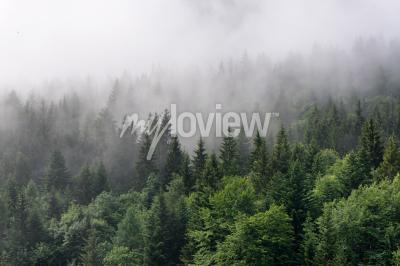 Fototapet Evergreen Forest Översikt