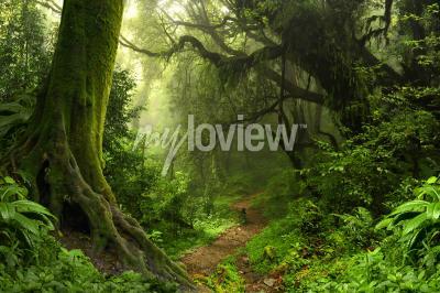 Fototapet Tropisk regnskog