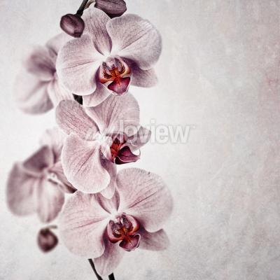 Fototapet En känslig rosa orkidé på bleka vintage stil bakgrund