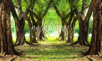 Fototapet Magisk skoggrön