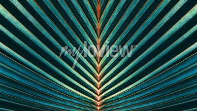 Fototapet Stripad av palmblad