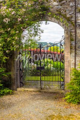 Fototapet Beautiful old garden gate covered with green ivy