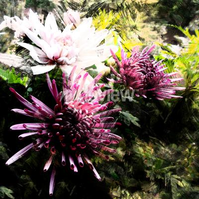 Fototapet Stylized bouquet of chrysanthemums on grunge striped and stained background