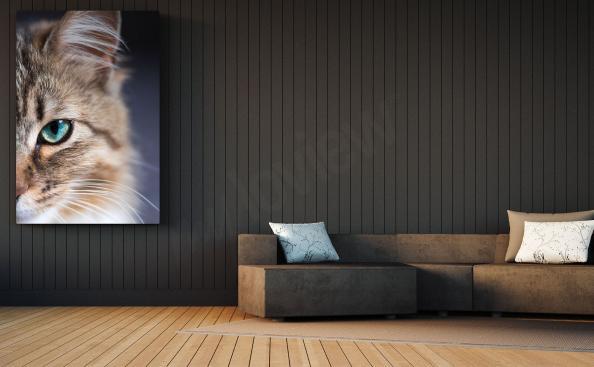 Canvastavla katt till vardagsrummet