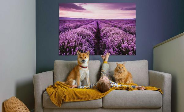 Canvastavla lavendel i vardagsrummet