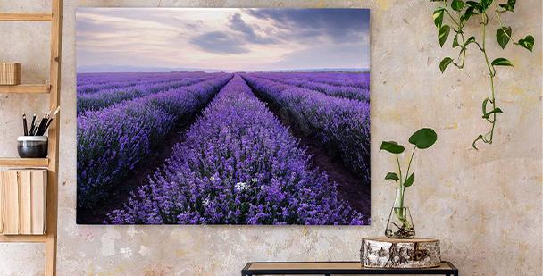 Canvastavla lavendelfält