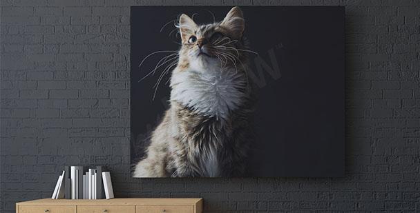 Canvastavla med en katt på bakgrund