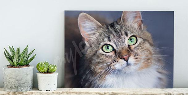 Canvastavla med husdjur