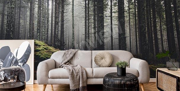 Fototapet dimmig skog