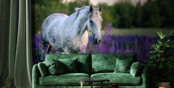 Fototapet häst på lavendelfält