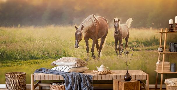 Fototapet hästar vid solnedgången