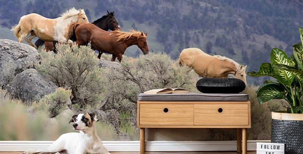Fototapet med hästar i galopp