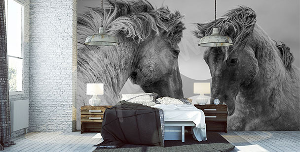 Fototapet två hästar