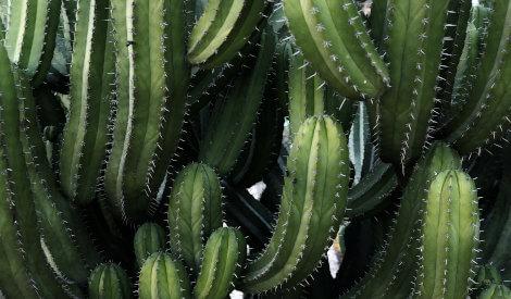 Grönska